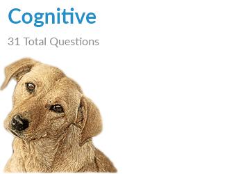 dog thinking -cognitive