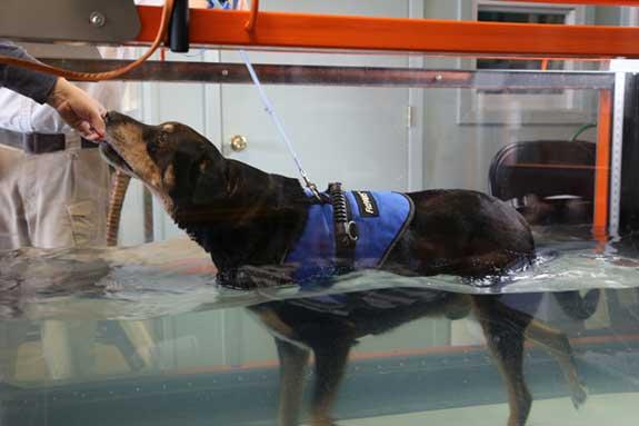 Jasper on Water Treadmill