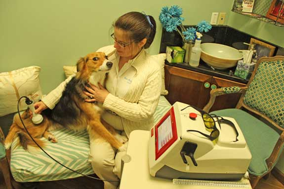 Pet receiving Laser Therapy