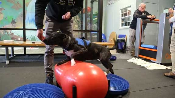 focus training, mild interaction with Pilates