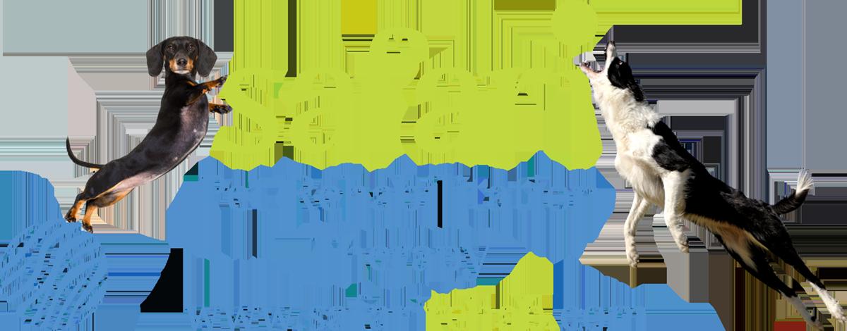 Safari Pet Rehabilitation Graphic