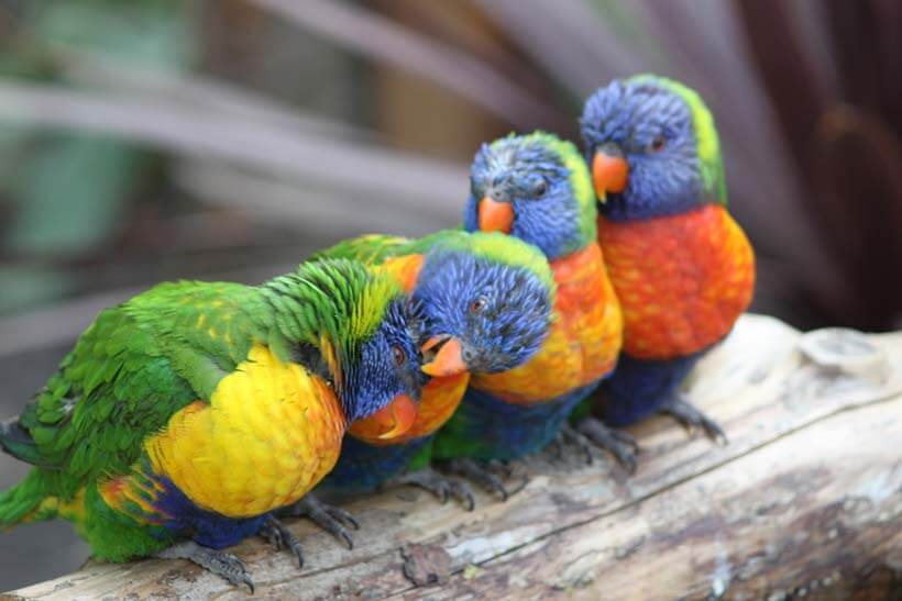Image of Baby Parrots