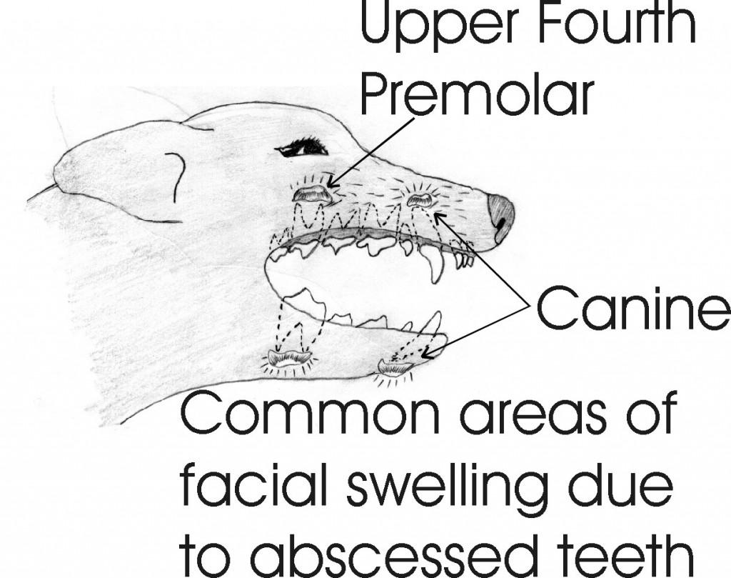 dentistry_9