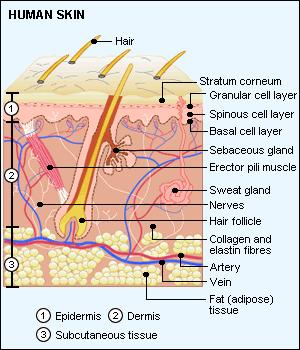 dermatology_1