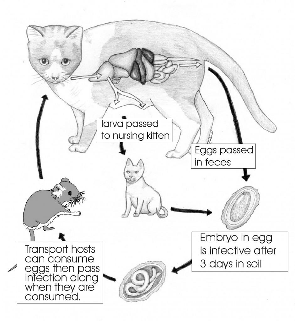 parasiticworms_figure10