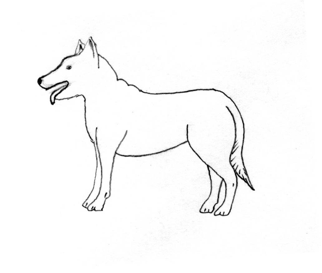 Ethology -Pet Behavior | Safari Veterinary Care Centers in League ...