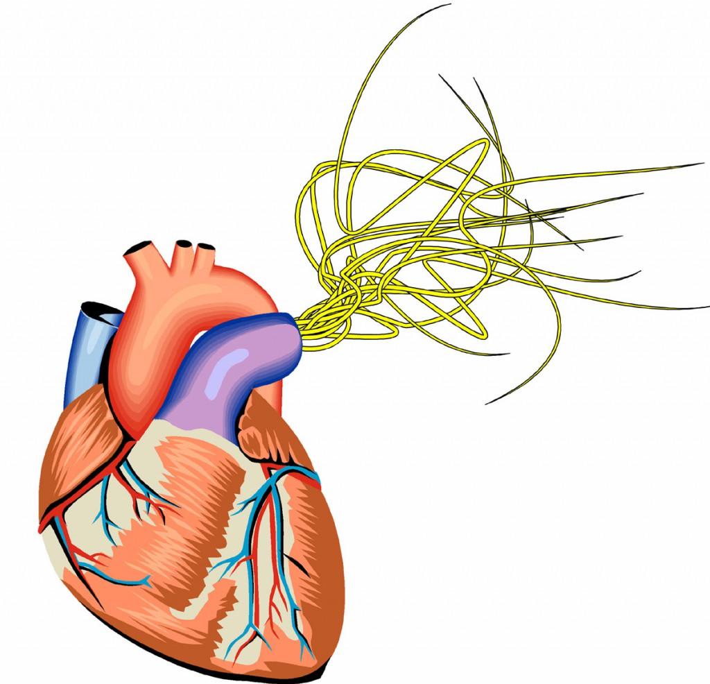 heartwrm_1