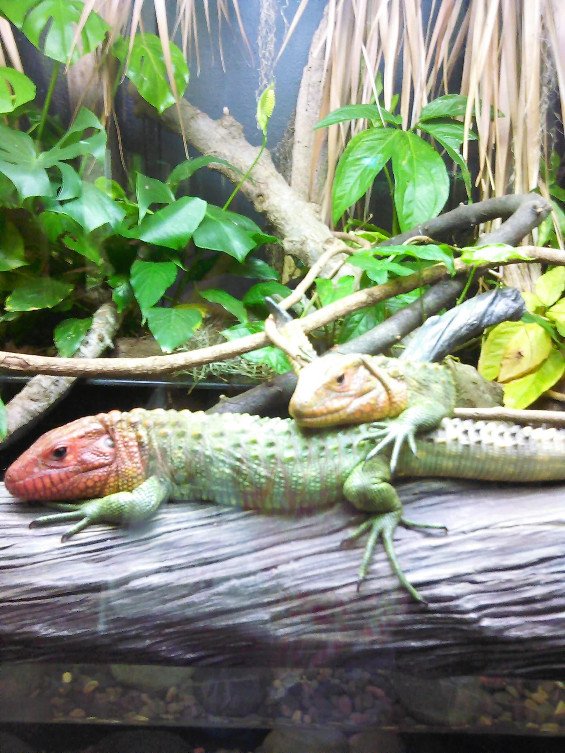 General Reptile Care -Reptile & Amphibians Care | SafariVet Lg. City, TX