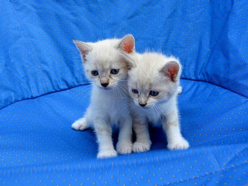 kittens-under-6month1