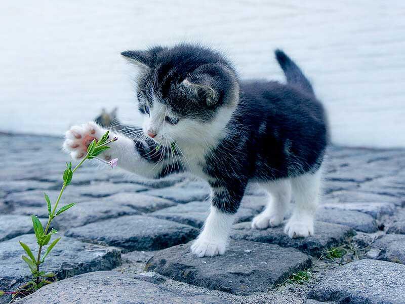kittens-under-6month2