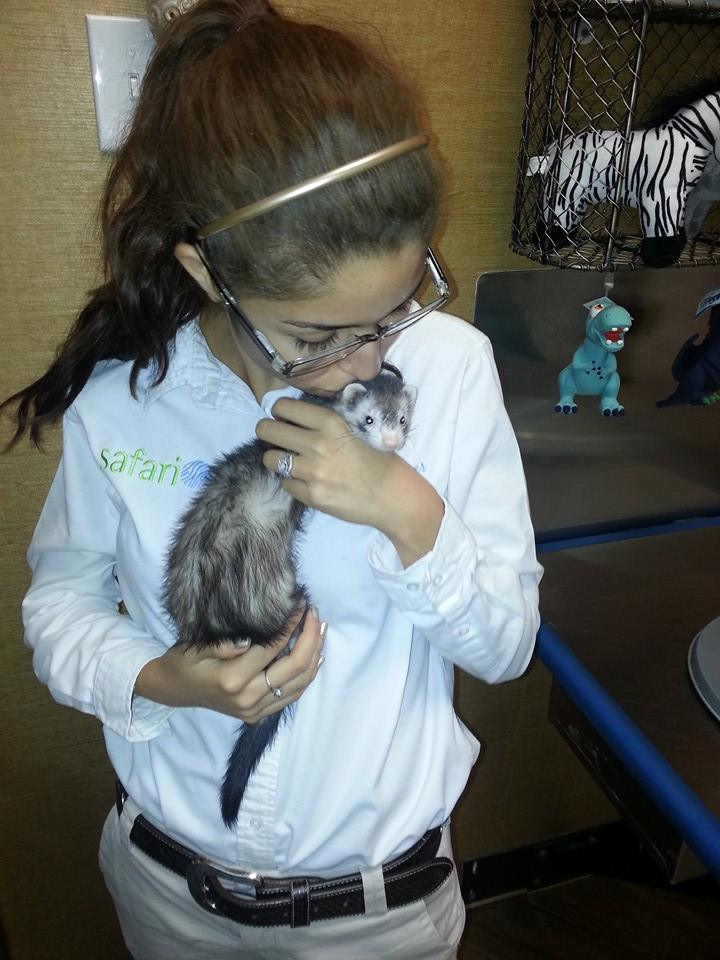 Ferret Care | Safari Veterinary Care Centers in League City, TX