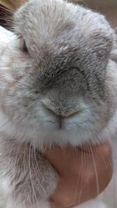 page-rabbits