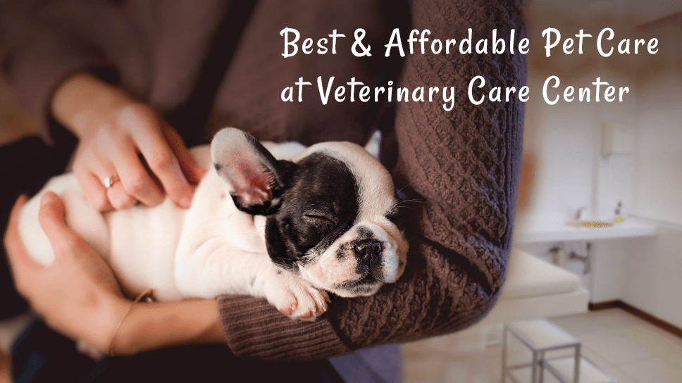 Ensure your pet has the best care at Pet Care Center-min