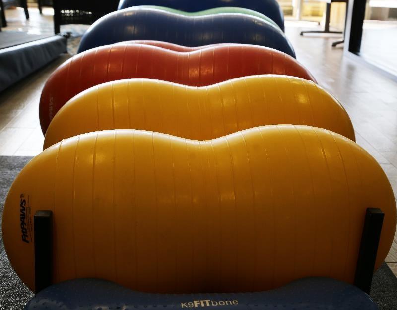Safari's Rehabilitation Room, Therapeutic Balls