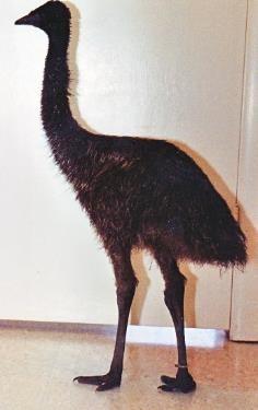 Emu in Safari waiting room