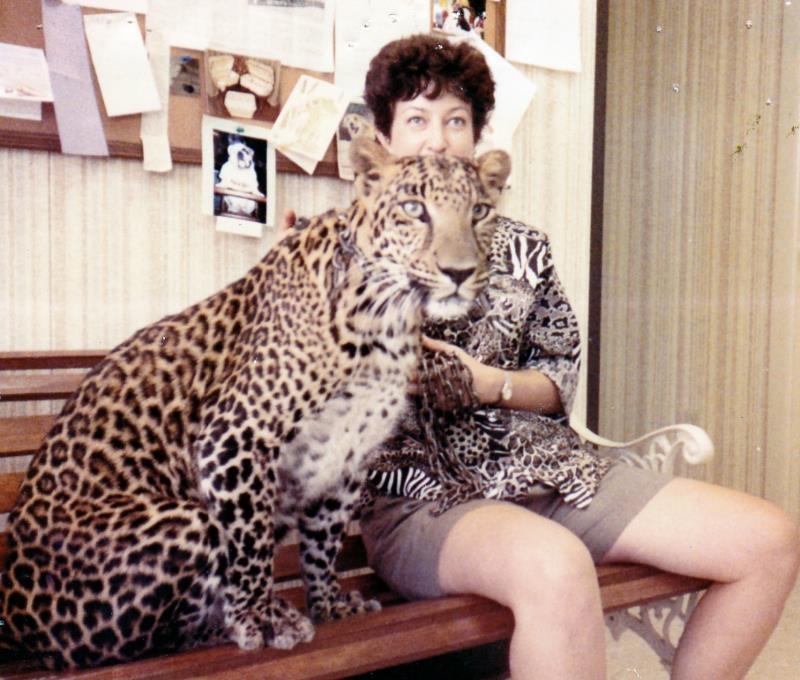 Chauncy the leopard in Safari's Reception area