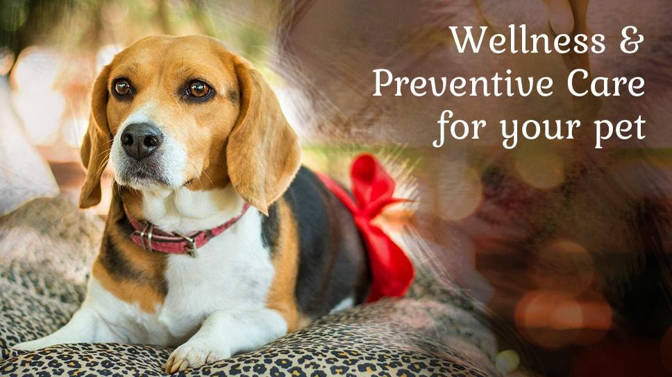 Preventive Care-min