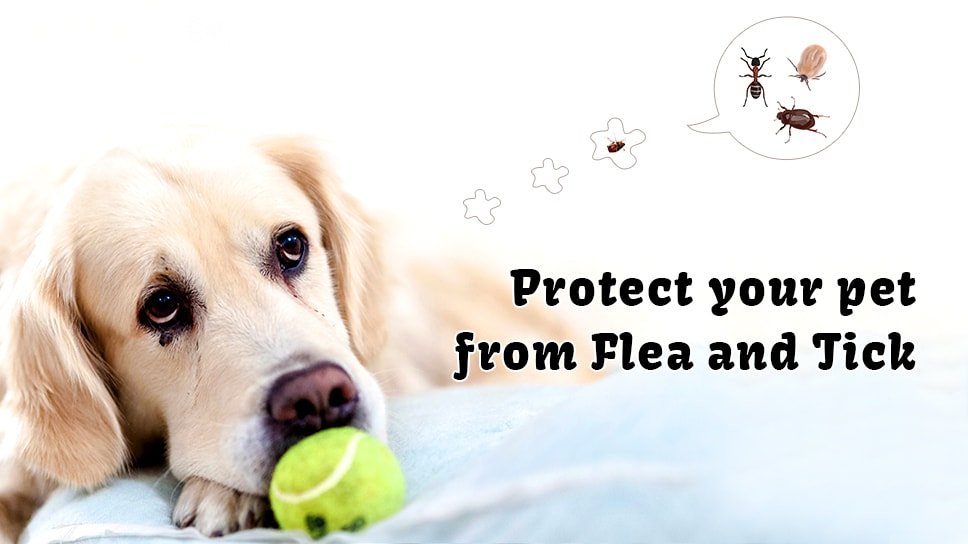 Protect your pet from ticks and fleas-min