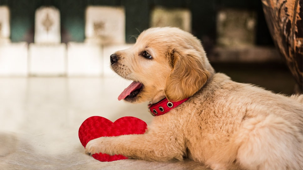 Health & Wellness-How to take preventive care of your Pet's heart disease
