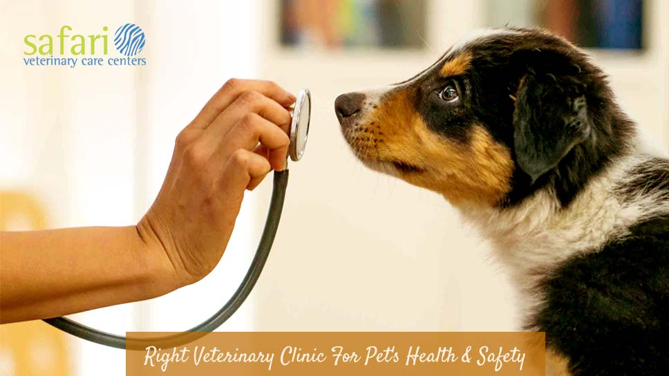 How to select right veterinary clinic for your pet