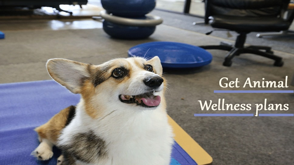 Get Animal Wellness plans from League City Animal Hospital