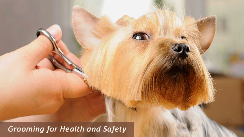 Grooming-for-Health-and-Safety