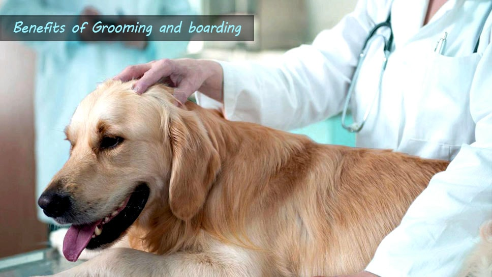 Summer Wellness Benefits of Grooming and Boarding for your healthy pet