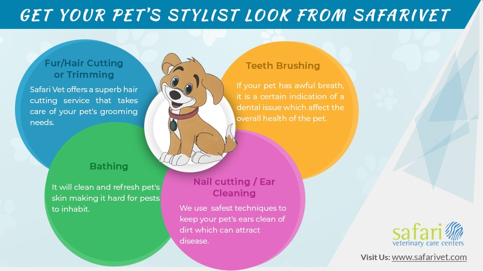 Pet Grooming- Give your Pet a stylish look from SafariVet Grooming Stylists