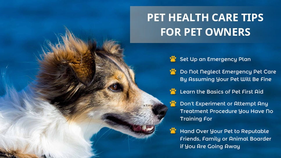 Pet-Health-Care-Tips-for-PetOwners