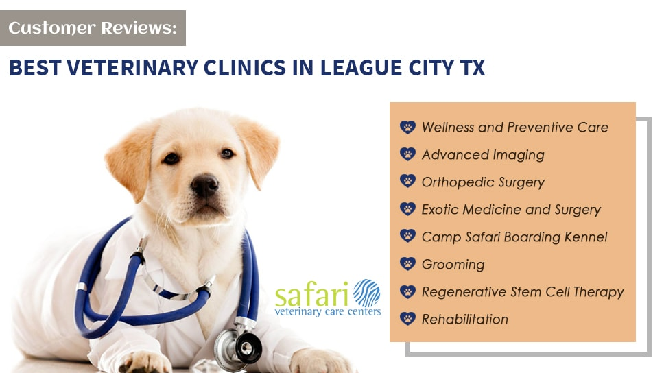 Customer Reviews One of the Best Veterinary Clinics in League City TX