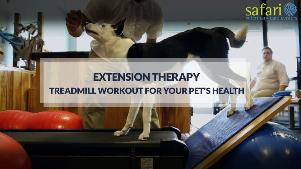 ExtensionTherapy-Treadmill workout for your pet health