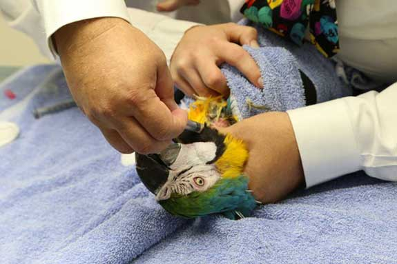 Sara the Macaw