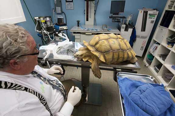 Rocky the Tortoise