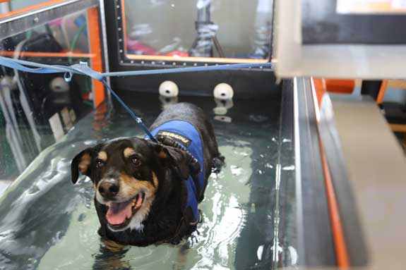 Jasper on Water Treadmill