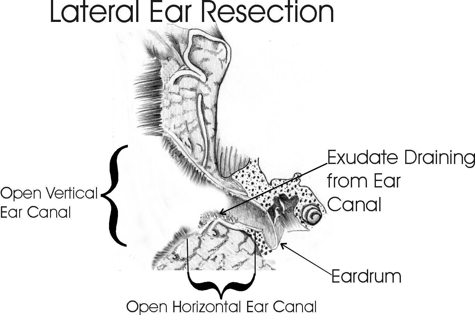 Ears_17