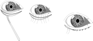 eye_structure_5