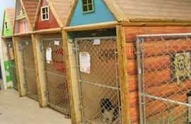 camp-safari-boarding-kennel