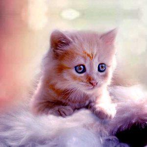 kittens-under-6month3