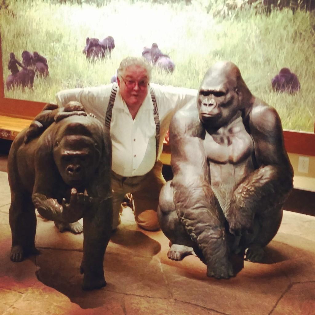 primates-monkey