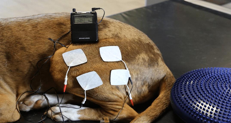 Electrostimulation