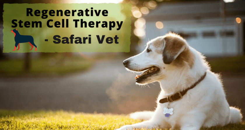 value-added-benefits-of-stem-cell-therapy-in-a-pets-treatment