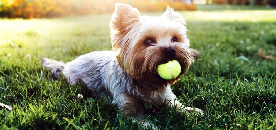 healthy-nutritious-diet-and-daily-exercise-which-helps-to-keep-your-pet-healthy-and-stress-free