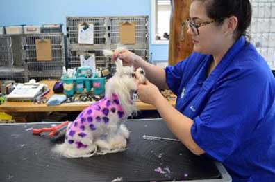 Grooming Stylist, Hannah, pet pampering!