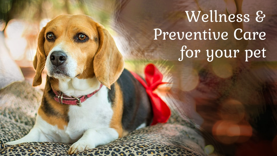 preventive-care-for-your-pet-to-keep-them-happy-and-healthy