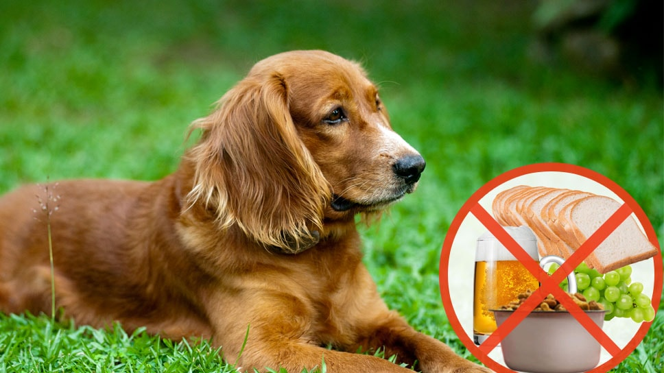 Pet Health Things that you should avoid in your Dog's Food-min