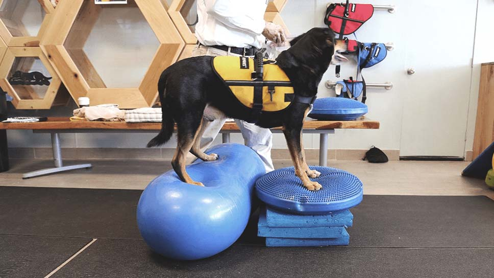 Importance of Rehabilitation for your pet