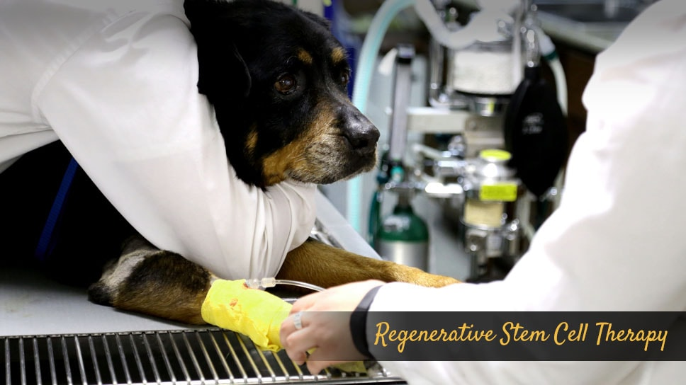 Regenerative-Stem-Cell-Therapy