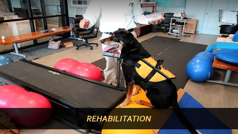 Special Treatments Rehabilitation