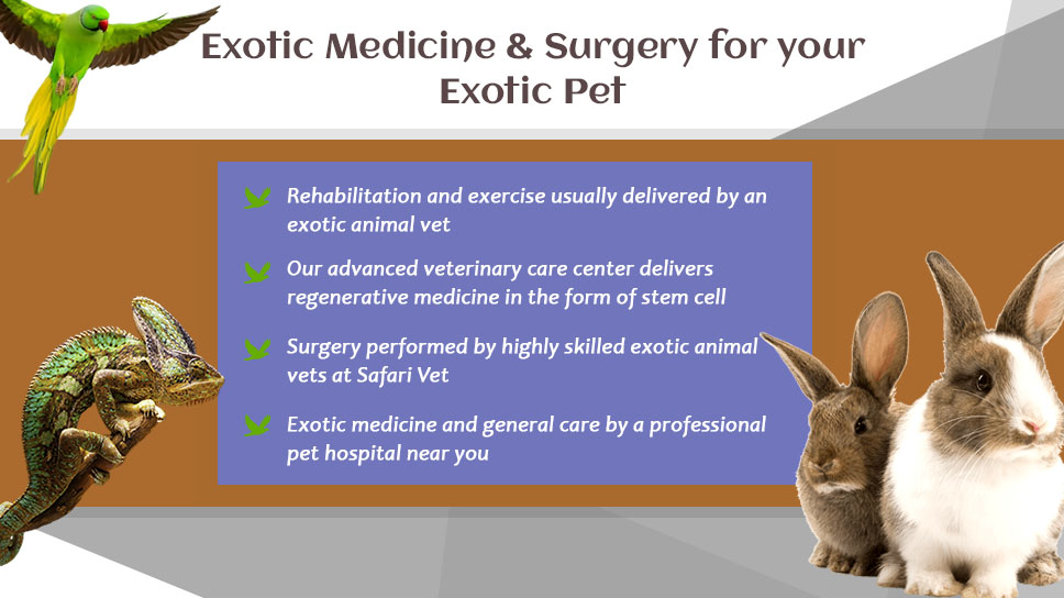 safari-vets-exotic-medicine-surgery-for-your-exotic-pet