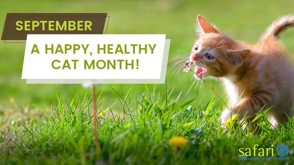 september-a-happy-healthy-cat-month
